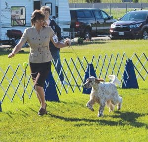 Ontario County Kennel Club All Breed Championship Shows