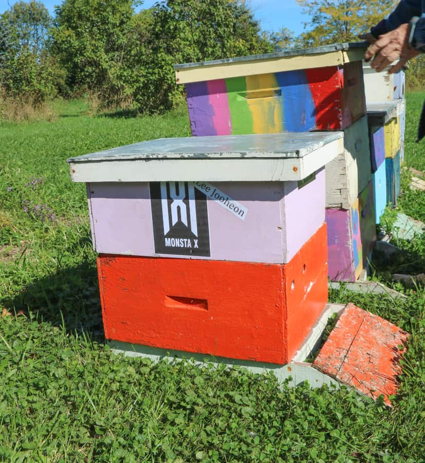 """R"" FARM beehive sponsorship program"
