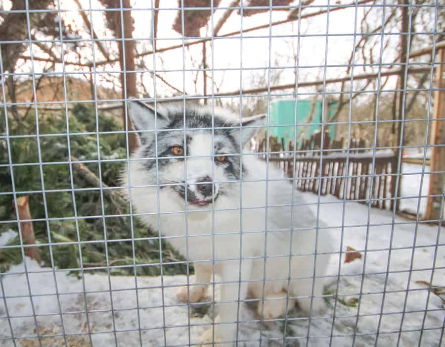 Rescue, rehabilitate and release is the goal of SCWR