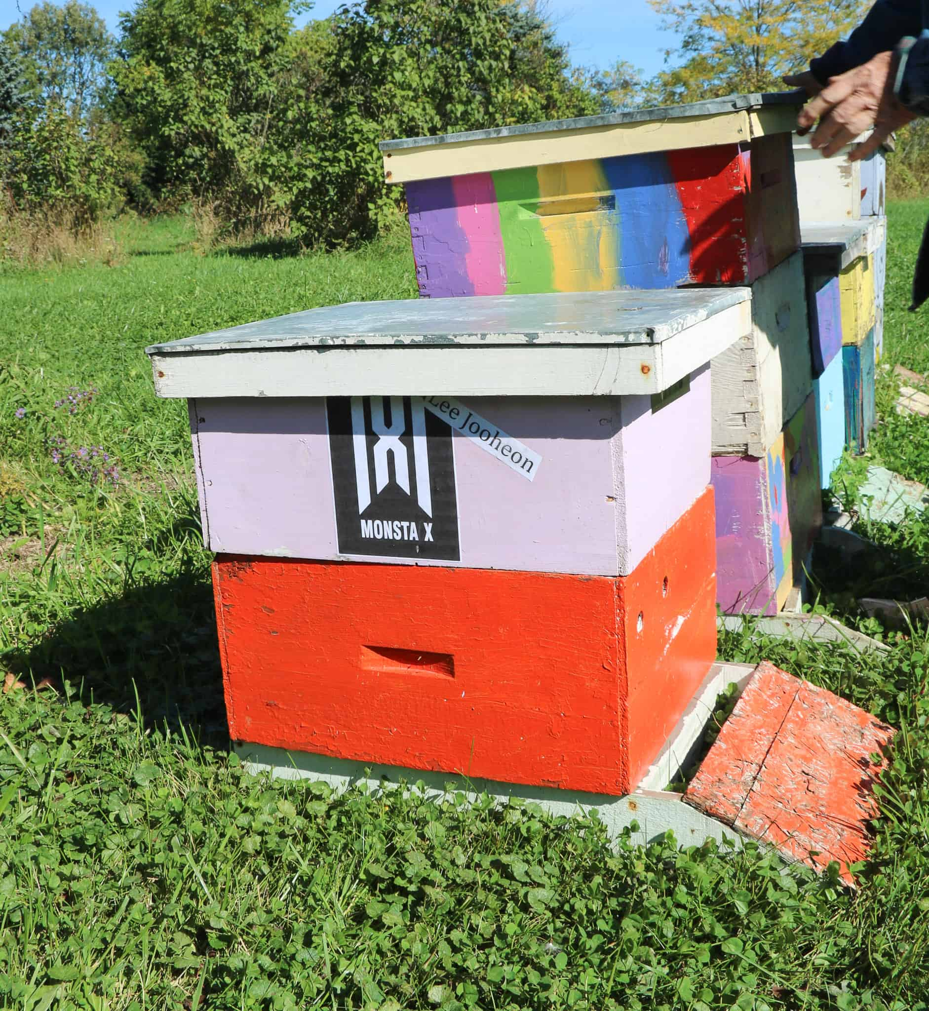 Local Adopt a Beehive program drawing international attention