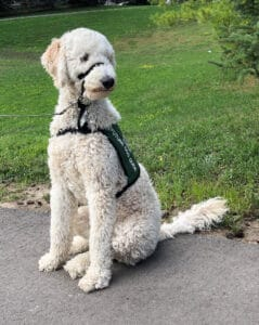 Lions Foundation of Canada Dog Guides program faces challenges due to COVID