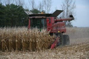 Read more about the article A great year for corn and soybeans!