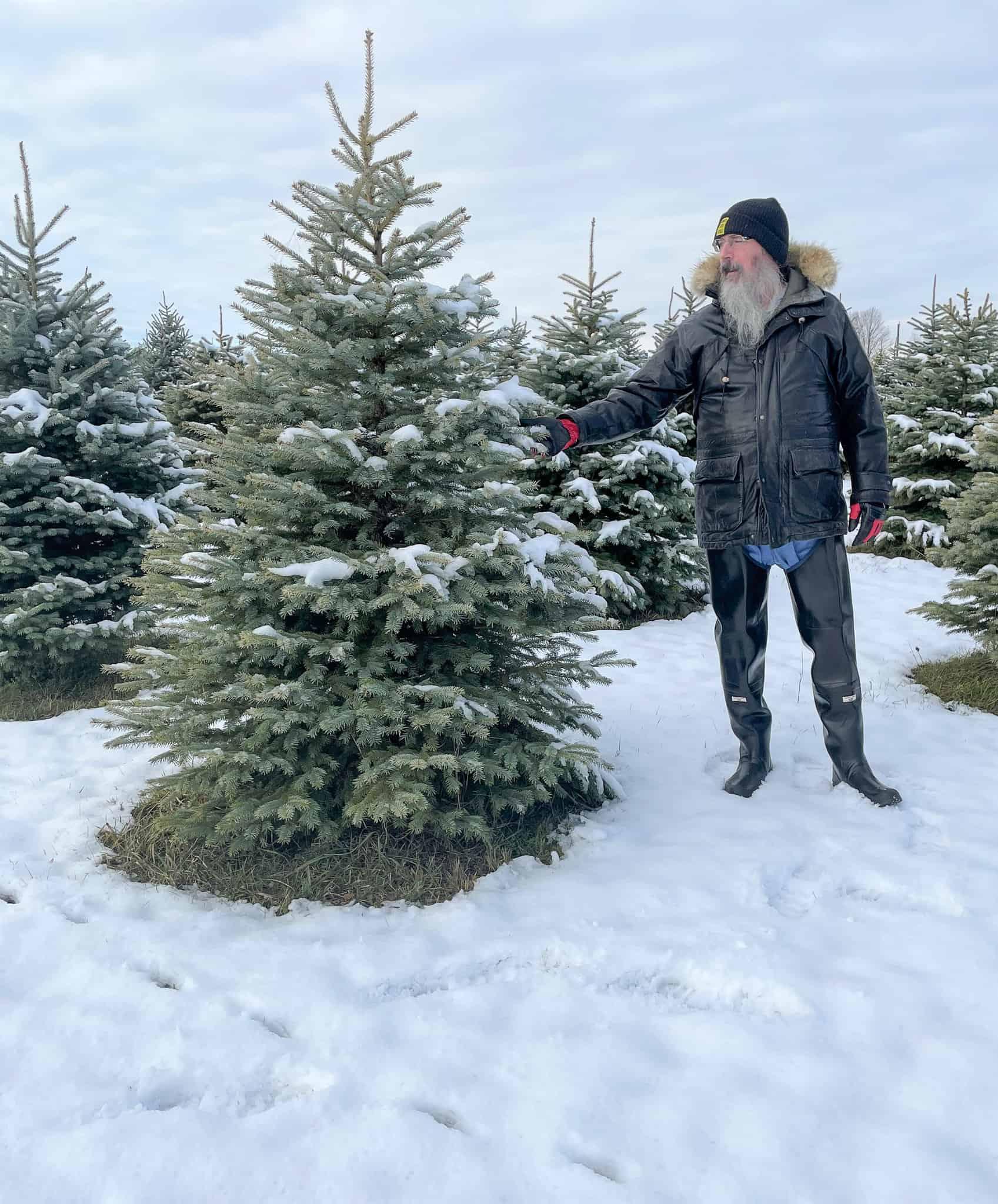 Cut your own tree at Tallboots Farm