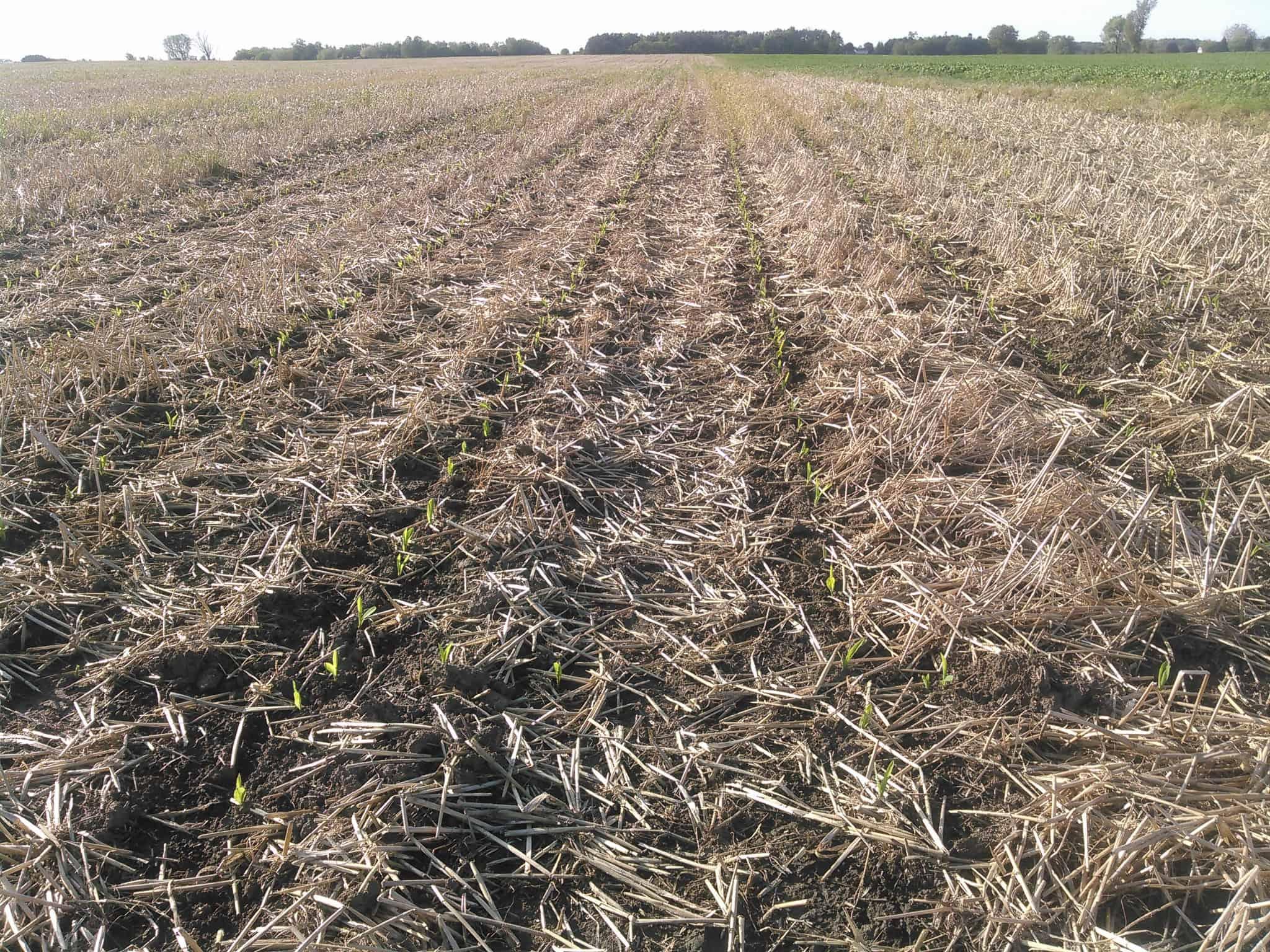 20190602-seedlings emerging from field – Soil story
