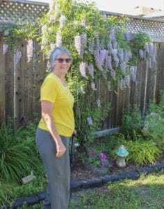 Read more about the article Eye catching Wisteria