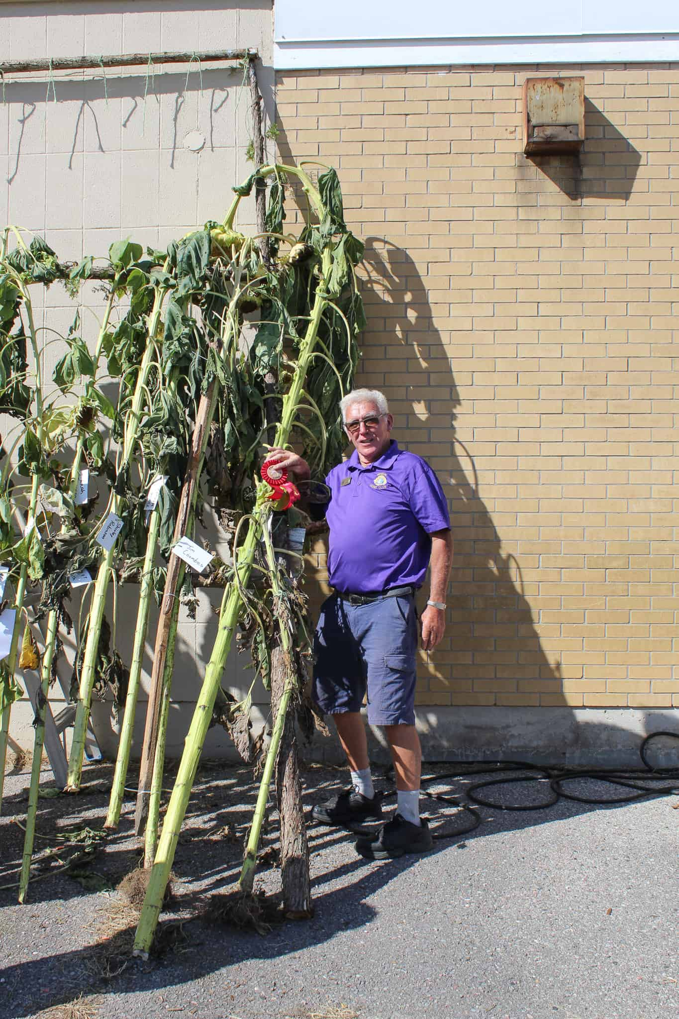 Read more about the article Kendal Lions Club Second Annual Sunflower Contest